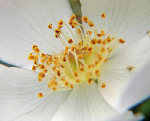 Deko Blumen Sonn Ostfildern/Nellingen