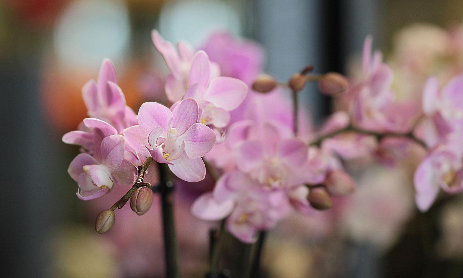 Event- und Tischdekoration - Blumen Sonn Ostfildern