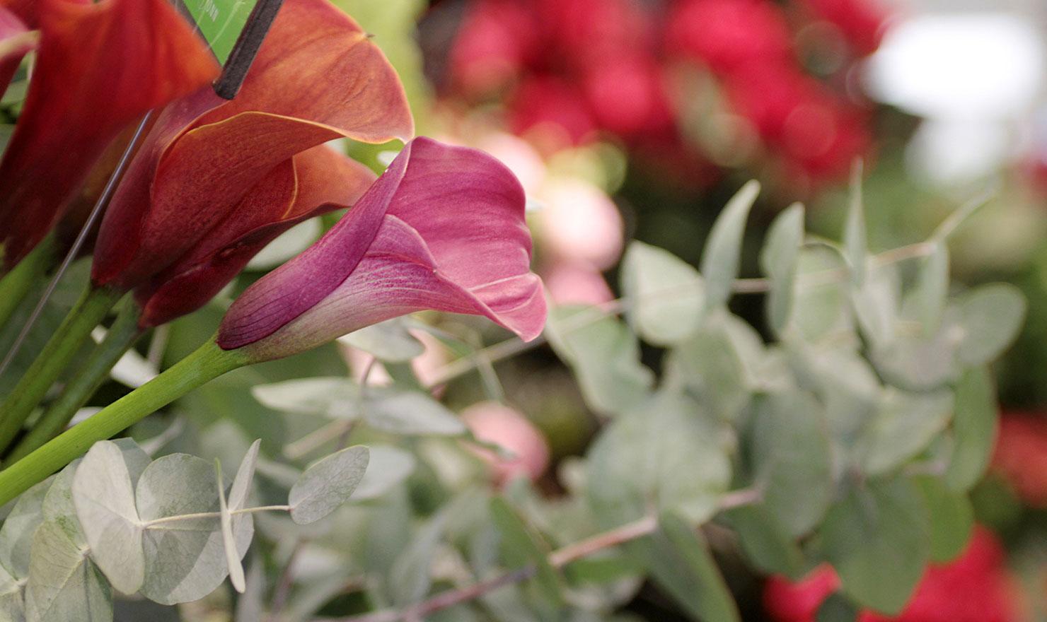 Blumen Sonn Ostfildern
